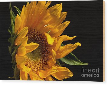 Wood Print featuring the photograph Sunflower 2010 by Art Barker