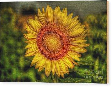 Sunflower Wood Print by Adrian Evans