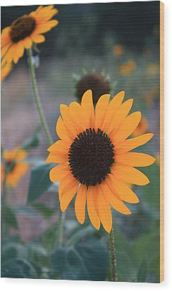 Sunflower Wood Print by Alicia Knust