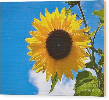 Sunflower And Bee At Work Wood Print