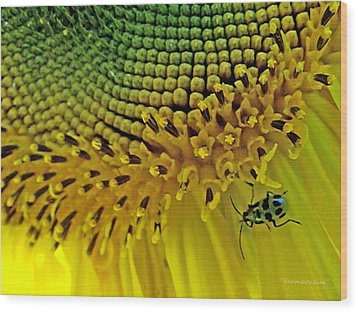 Sunflower And Beetle Wood Print