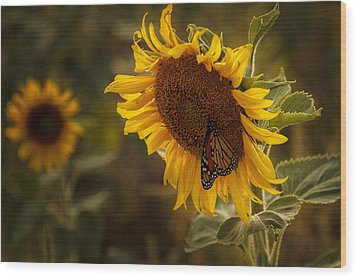 Sunflower And Butterfly Wood Print