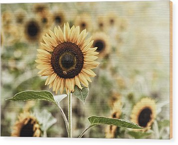 Sunflower And The Bee Wood Print by June Jacobsen