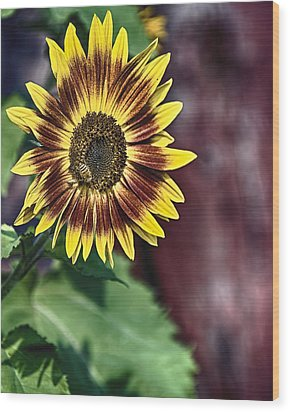 Sunflower At The Barn Wood Print by Gary Neiss