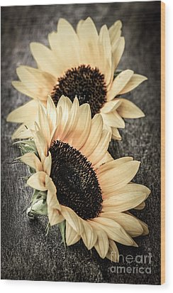 Sunflower Blossoms Wood Print by Elena Elisseeva