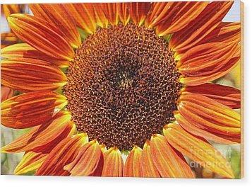 Sunflower Burst Wood Print by Kerri Mortenson