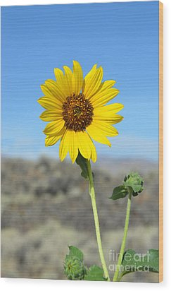 Sunflower By Craters Of The Moon Wood Print