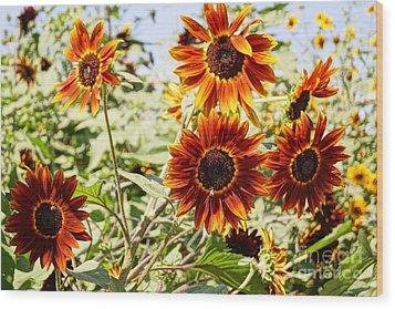 Sunflower Cluster Wood Print by Kerri Mortenson