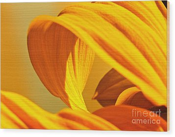 Sunflower Curve Wood Print by Michael Cinnamond