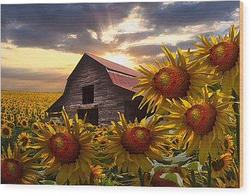 Sunflower Dance Wood Print by Debra and Dave Vanderlaan