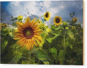 Sunflower Dream Wood Print by Debra and Dave Vanderlaan