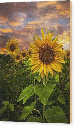 Sunflower Dusk Wood Print by Debra and Dave Vanderlaan