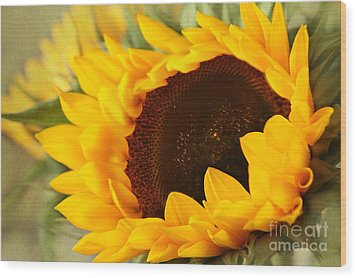 Wood Print featuring the photograph Sunflower by Eden Baed