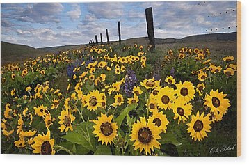 Sunflower Field Wood Print by Cole Black