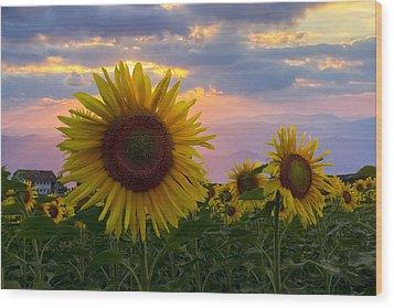 Sunflower Field Wood Print by Debra and Dave Vanderlaan