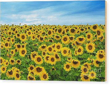 Wood Print featuring the photograph Sunflower Field by Mike Ste Marie