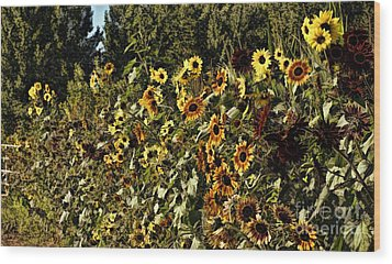 Sunflower Fields Forever Wood Print by Peggy Hughes