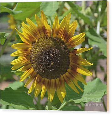 Sunflower Glory Wood Print by Luther Fine Art