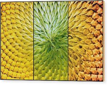 Sunflower Heart Triptych Wood Print by Lisa Knechtel