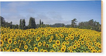 Sunflower Horizon Wood Print