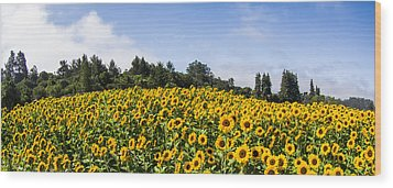 Sunflower Horizon Number 2 Wood Print