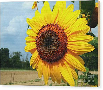 Sunflower In Summer Wood Print