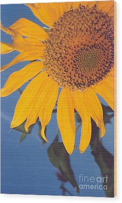 Sunflower In The Corner Wood Print by Heather Kirk