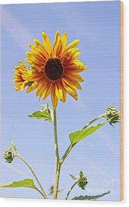 Sunflower In The Sky Wood Print by Kerri Mortenson