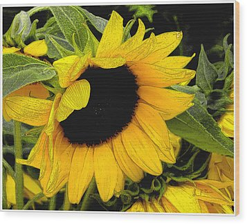 Wood Print featuring the photograph Sunflower by James C Thomas