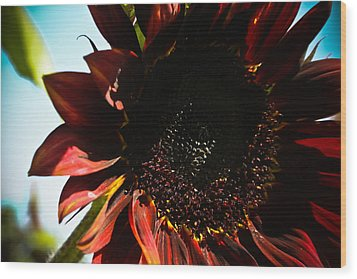 Sunflower Wood Print by Joel Loftus