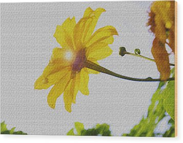 Wood Print featuring the photograph Sunflower by Kandy Hurley