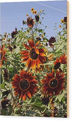 Sunflower Layers Wood Print by Kerri Mortenson