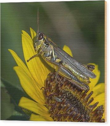 Sunflower Love Wood Print by Ernie Echols
