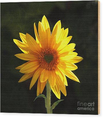 Wood Print featuring the photograph Sunflower Love by Marjorie Imbeau