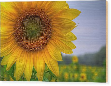 Wood Print featuring the photograph Sunflower by Michael Donahue