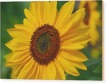 Sunflower Wood Print by Michele Wright