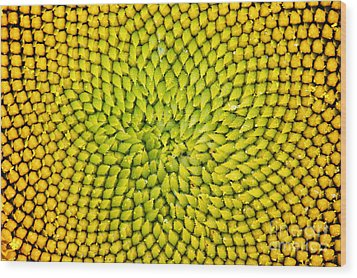 Sunflower Middle  Wood Print