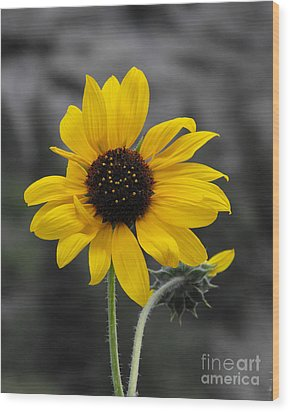 Sunflower On Gray Wood Print