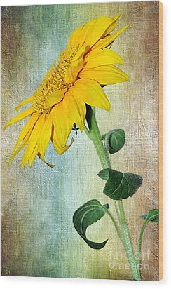 Sunflower On Textured Canvas Wood Print by Kaye Menner