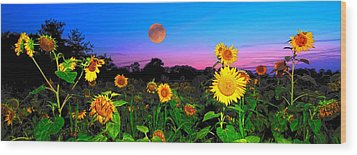 Sunflower Patch And Moon  Wood Print by Randall Branham