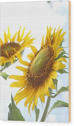 Sunflower Perspective Wood Print by Kerri Mortenson