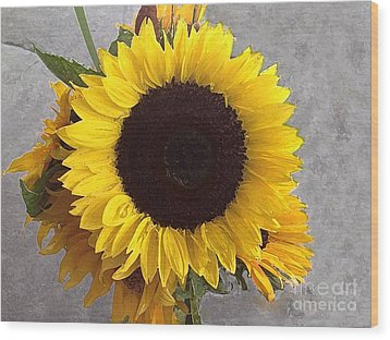 Sunflower Photo With Dry Brush Filter Wood Print