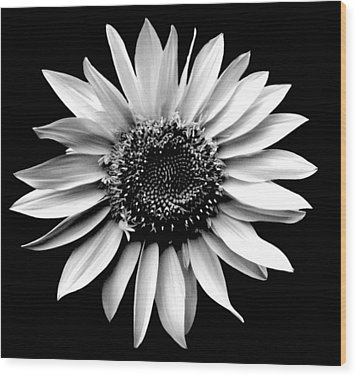 'sunflower Portrait' Wood Print