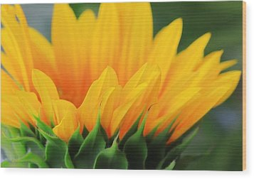 Sunflower Profile Wood Print