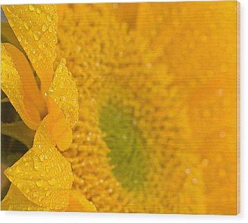Sunflower Raindrops Wood Print by Joan Herwig