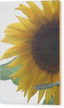 Sunflower Wood Print by Rebecca Powers
