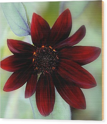 Sunflower Red Wood Print by Rosanne Jordan