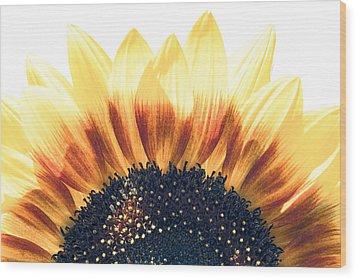 Sunflower Rising Wood Print by Wade Brooks