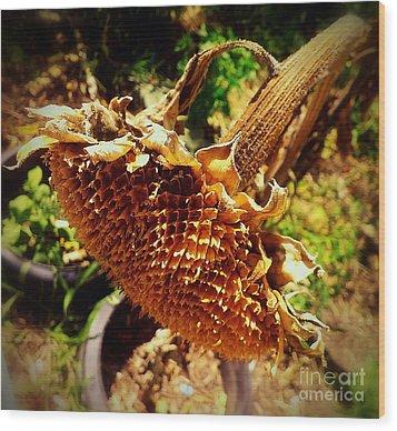 Sunflower Seedless 1 Wood Print by James Aiken
