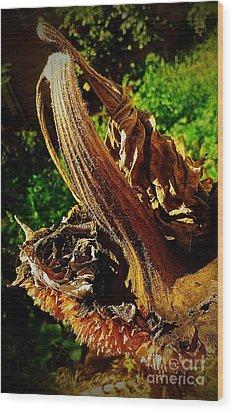 Sunflower Seedless 2 Wood Print by James Aiken